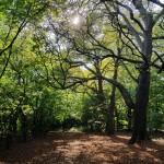 My Hilliingdon Trail - Mad Bess Wood lr