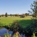 My Hilliingdon Trail - Yeading Brook approaching Ickenham Marsh